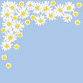 Many daisies on a blue background Royalty Free Stock Photography
