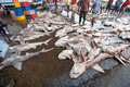 Many dead sharks on the ground. Fish market. Royalty Free Stock Photo