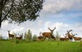 Many deers in wildlife Royalty Free Stock Photography