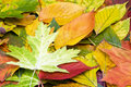 Many different autumn leaves Stock Photos