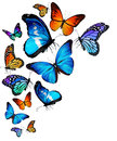 Many different butterflies flying isolated on white background Royalty Free Stock Photography