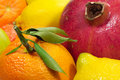 Many different ripe juicy fruits closeup Royalty Free Stock Photography