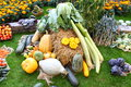 Many Different Vegetables in Garden on a Hay ball Royalty Free Stock Photo