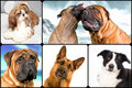 Many dogs Royalty Free Stock Photography