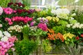 Many flowers in florist shop Royalty Free Stock Photo