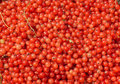 Many fresh red currants closeup Royalty Free Stock Photography