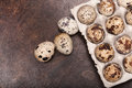 Many fresh speckled quail eggs in cardboard container Stock Photos
