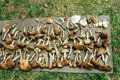 Many gathered different mushrooms, leisure in summer mountains,