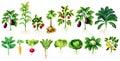 Molti tipo di foglie e radici