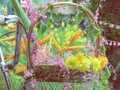 Many kinds of colorful flowers together in a basket on an old bicycle Royalty Free Stock Photo