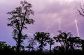 Many lightning strikes during dramatic thunderstorm with rain forest tree silhouettes in foreground, Cameroon, Africa Royalty Free Stock Photo