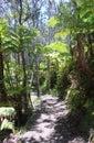 Many palm trees hawaii Royalty Free Stock Photo