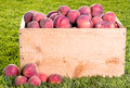 Many peaches in wooden crate Stock Photo
