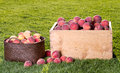 Many peaches in wooden crate and basket Royalty Free Stock Images