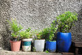 Many plant pots from plastics gallons Stock Image
