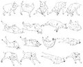 Many pose of dog drawing set on Royalty Free Stock Photos