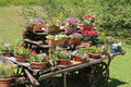 many pots of flowers in the chariot Royalty Free Stock Photo
