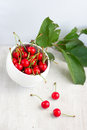 Many red cherry in the white cup and green leafs Royalty Free Stock Image
