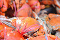 Many red crabs for sale on market Royalty Free Stock Photo