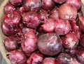 Many red onions from italy Royalty Free Stock Photo