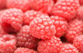 Many red raspberry Stock Photos