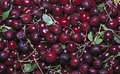 Many red ripe cherry berries Royalty Free Stock Photo