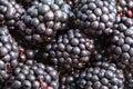 many ripe fresh blackberries close up Royalty Free Stock Photo