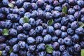 Many ripe plums with leaves at local market Royalty Free Stock Photo