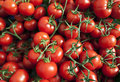 Many ripe red tomatoes background with fresh Stock Photos