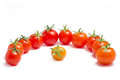 Many ripe tomatoes Stock Photography