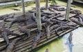 Many Small Alligators