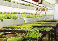Many small plants growing greenhouse Royalty Free Stock Photos