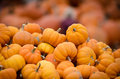 Many small pumpkins image of Stock Photo