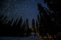 Many Stars Above Forest Trees