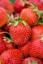 Many strawberries Stock Photo