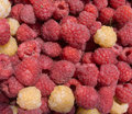 Many tasty fresh raspberry closeup Royalty Free Stock Photos