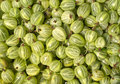 Many tasty green gooseberries closeup Royalty Free Stock Photos