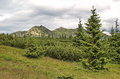 Many tints of green knee timber spruces and tatras mountains slovakia Royalty Free Stock Image