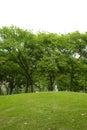 Many tree and small hill Royalty Free Stock Photo