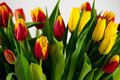 Many tulips closeup multicolored red yellow green orange Royalty Free Stock Photography