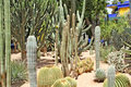 Many various green exotic cactuses Royalty Free Stock Images