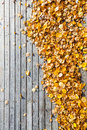 Many yellow leaves at wooden terrace floor see my other works in portfolio Stock Photos