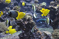 Many Yellow Tropical Fishes Stock Photos