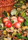 Manzanas hermosas rojas Imágenes de archivo libres de regalías