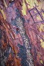 Manzanita tree bark colorful textured surface showing fire damage Royalty Free Stock Photos