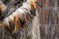 Maori cloak close up of feathers on a nz travel image Royalty Free Stock Image