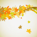 Maple autumn background Stock Image