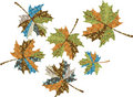 Maple autumn leaves Stock Images
