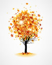 Maple autumn tree with leaves Royalty Free Stock Images