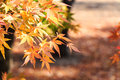 Maple and bokeh in autumn at seoraksan national park south korea Stock Photos